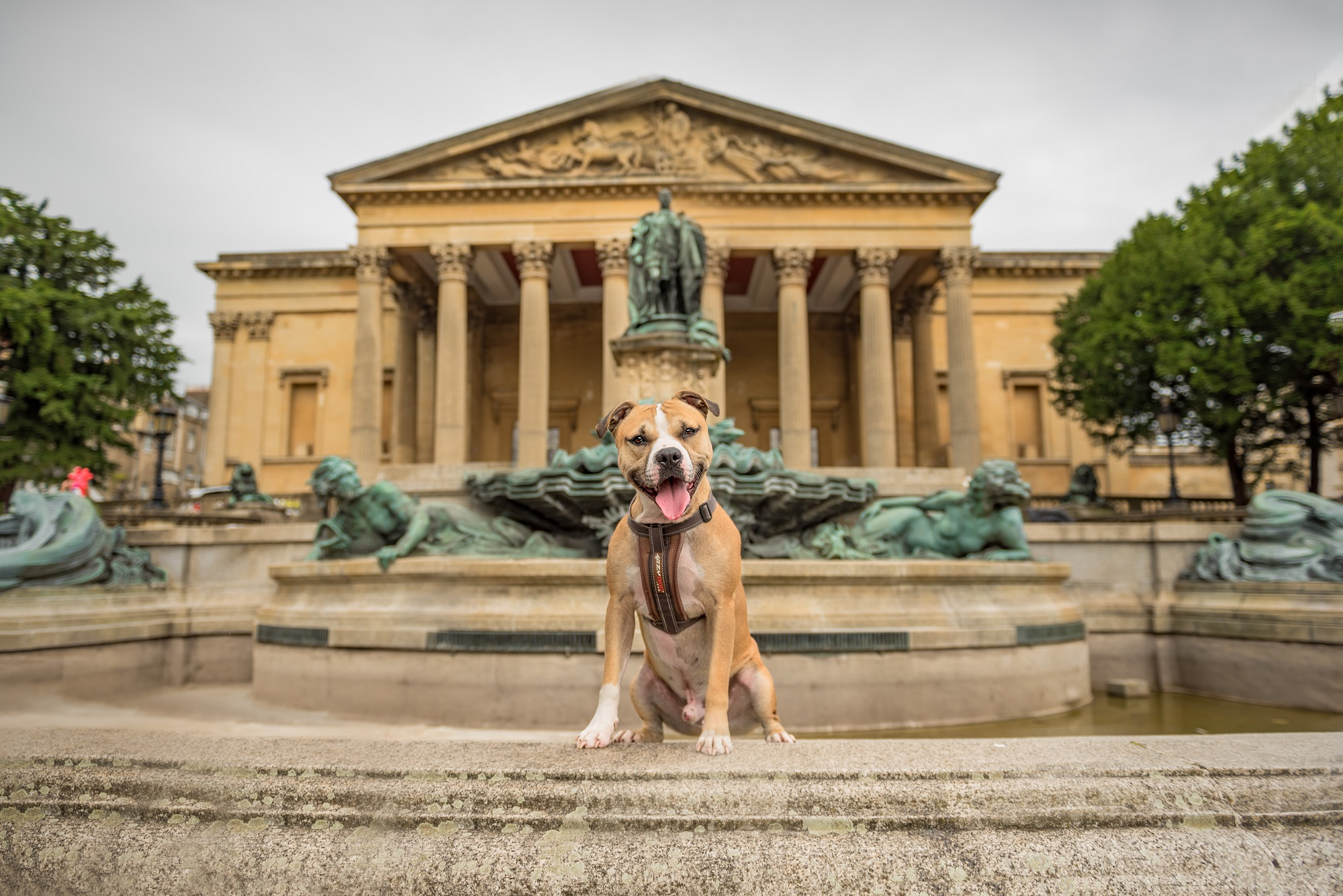 #StaffieSeptember - Staffies take to modelling in the hope of finding a new home