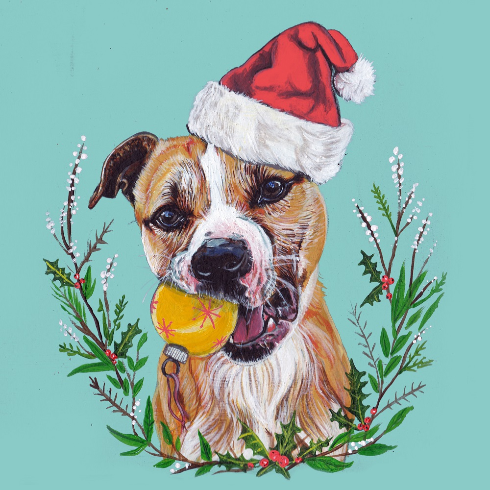 Christmas Cards | Bristol Animal Rescue Centre