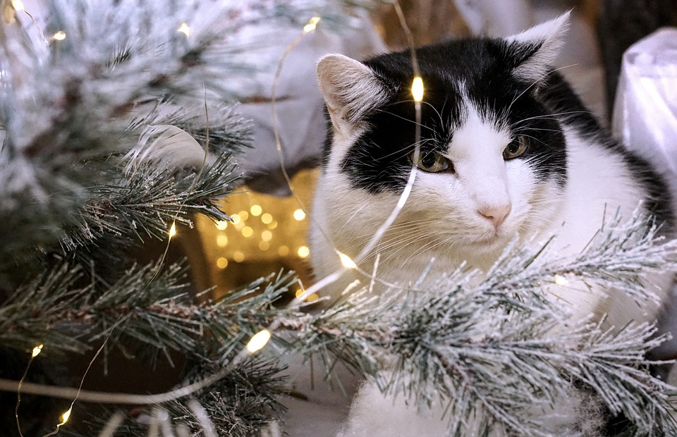 Keep your furry friends safe this festive season